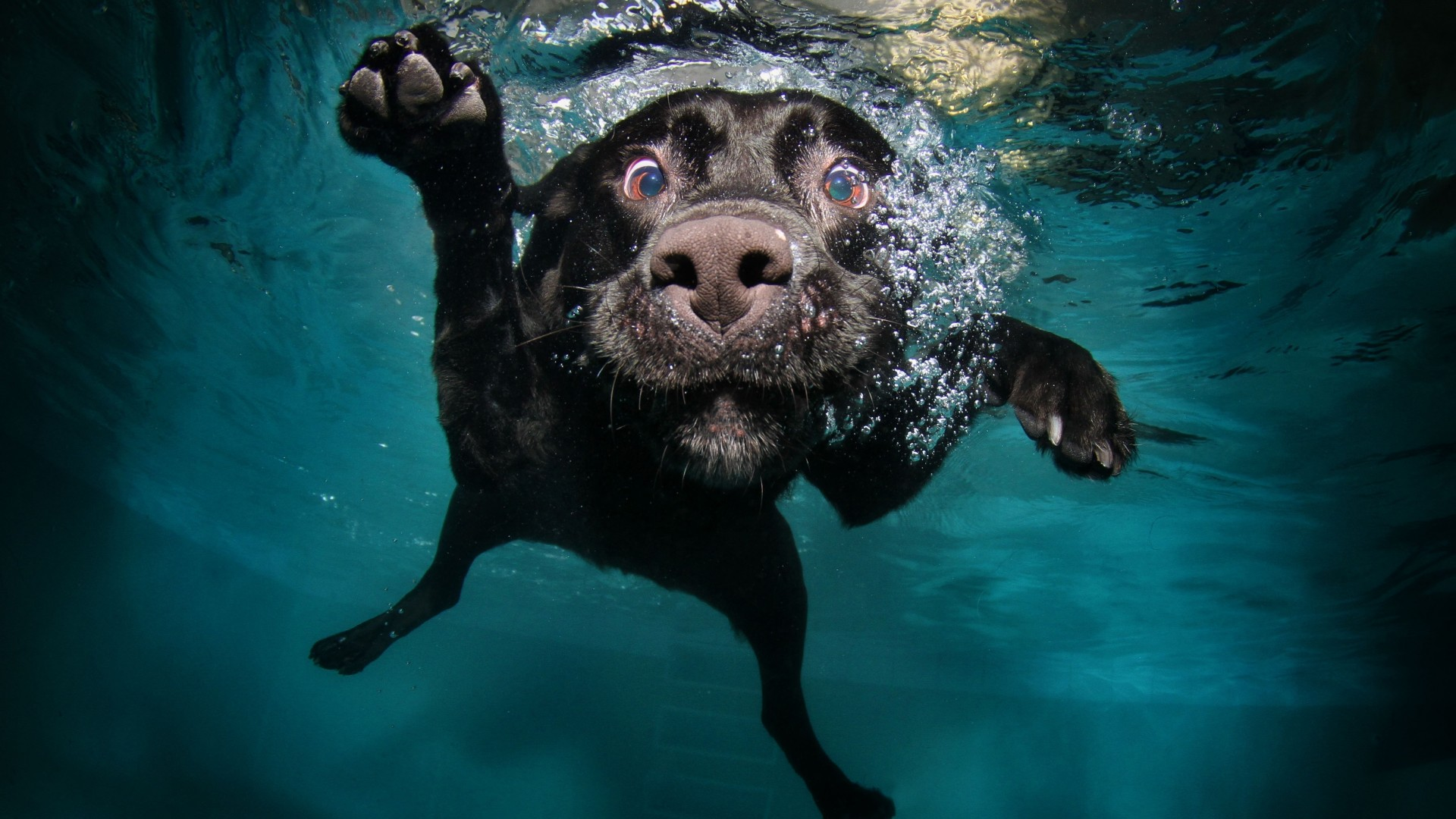Dog, 5k, 4k wallpaper, puppy, black, underwater, funny, animal, pet, water bubbles (horizontal)