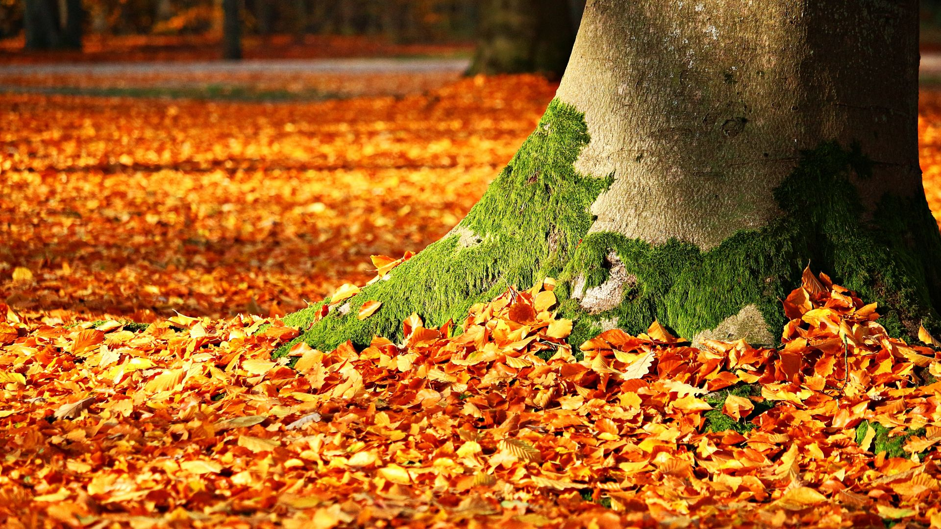 leaves, tree, autumn, 5k (horizontal)