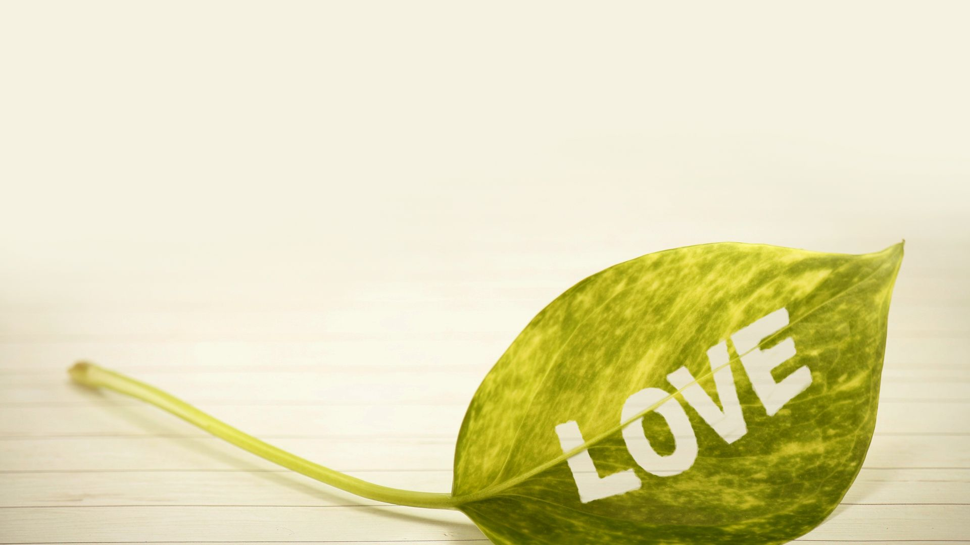 love image, leaf, 4k (horizontal)