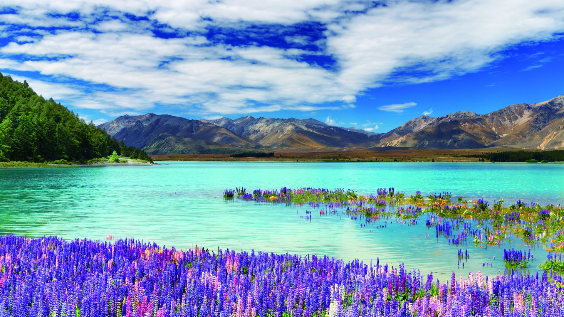 New Zealand, river, mountains, flowers, clouds, 4k (horizontal)