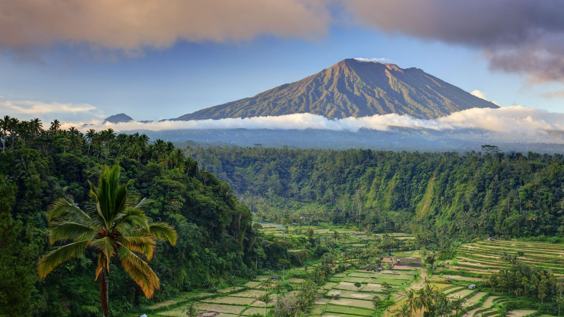 Bali, palms, trees, field, mountain, clouds, 5k (horizontal)