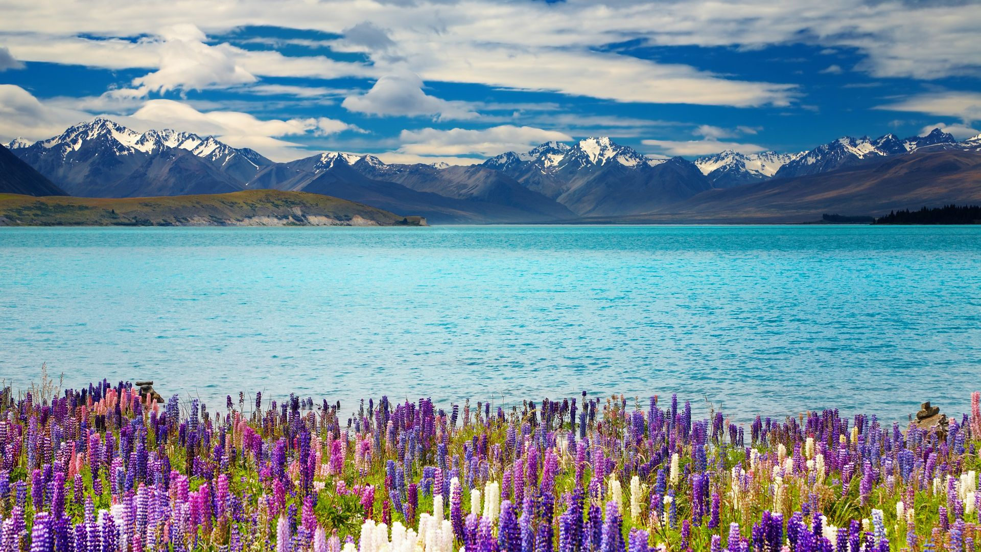 Lake Tekapo, New Zealand, mountains, flower, 4k (horizontal)