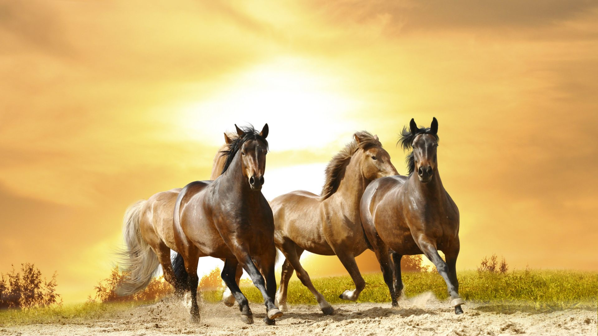 horses, cute animals, 8k (horizontal)