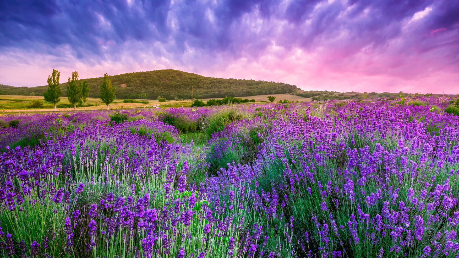 lavender, field, sky, mountain, Provence, France, Europe, 4k (horizontal)