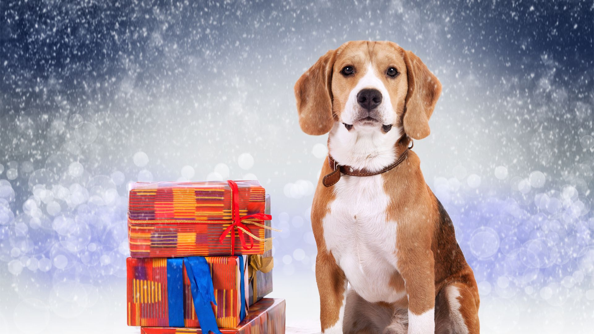 dog, cute animals, Christmas, New Year, 5k (horizontal)