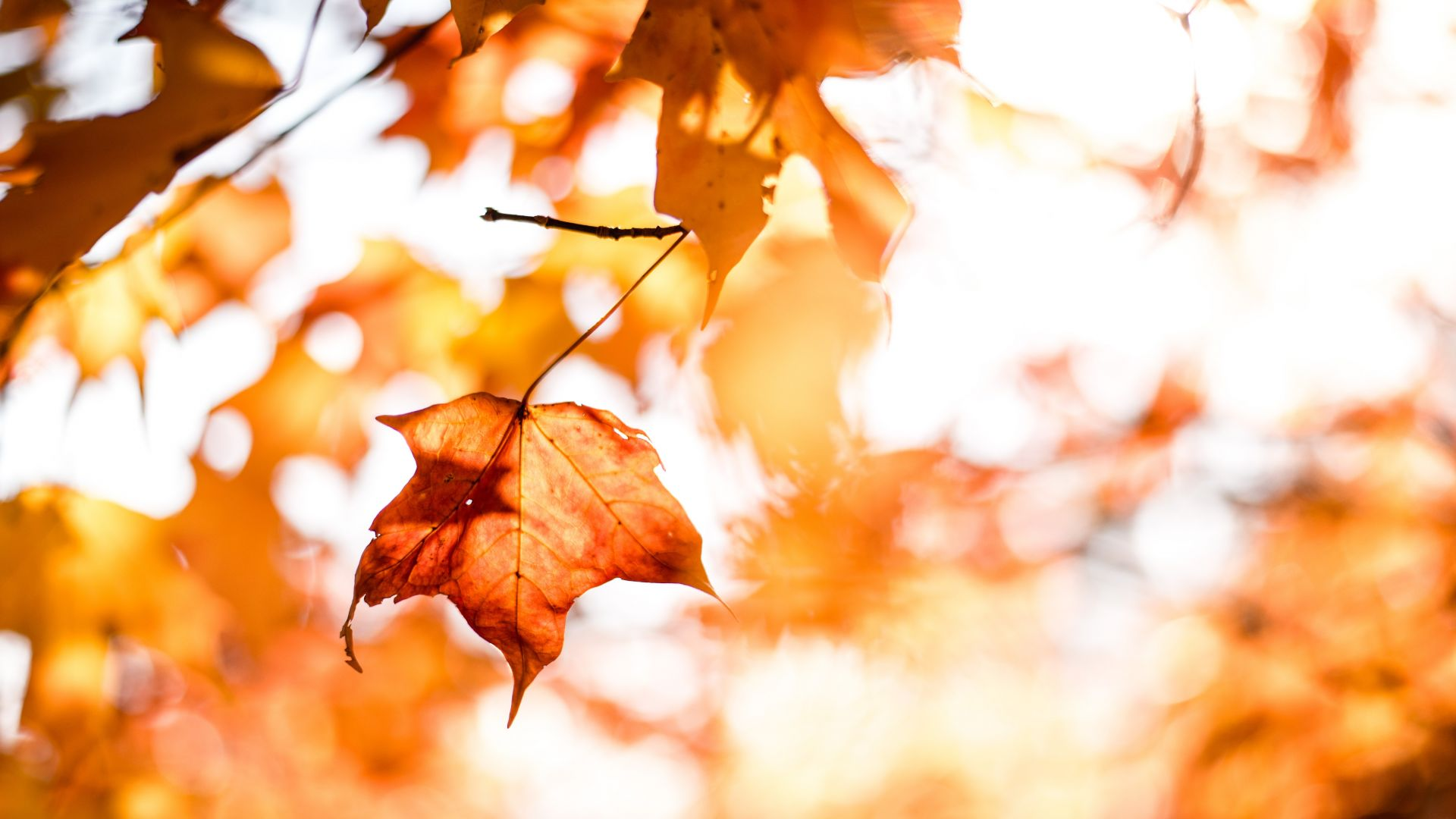 leaves, autumn, orange, 5k (horizontal)