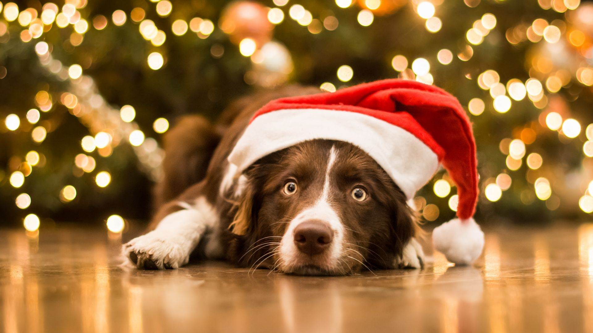 Christmas, New Year, dog, cute animals, 5k (horizontal)