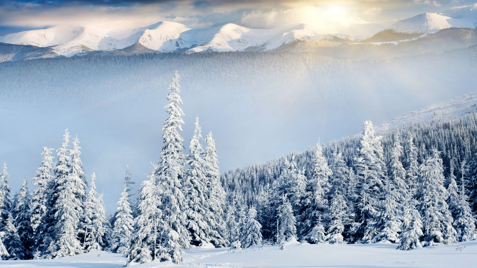 mountains, forest, trees, snow, winter, 8k (horizontal)