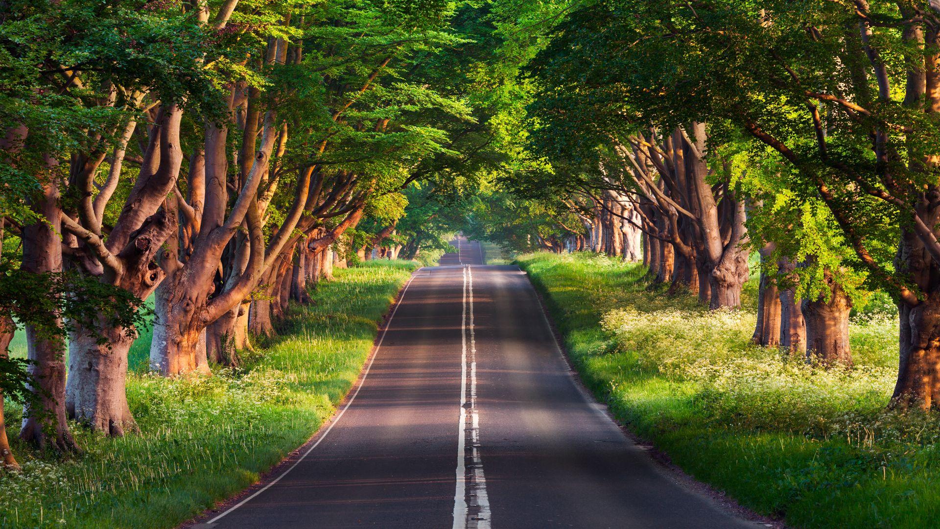Wallpaper Road Trees Summer 4k Nature 17125