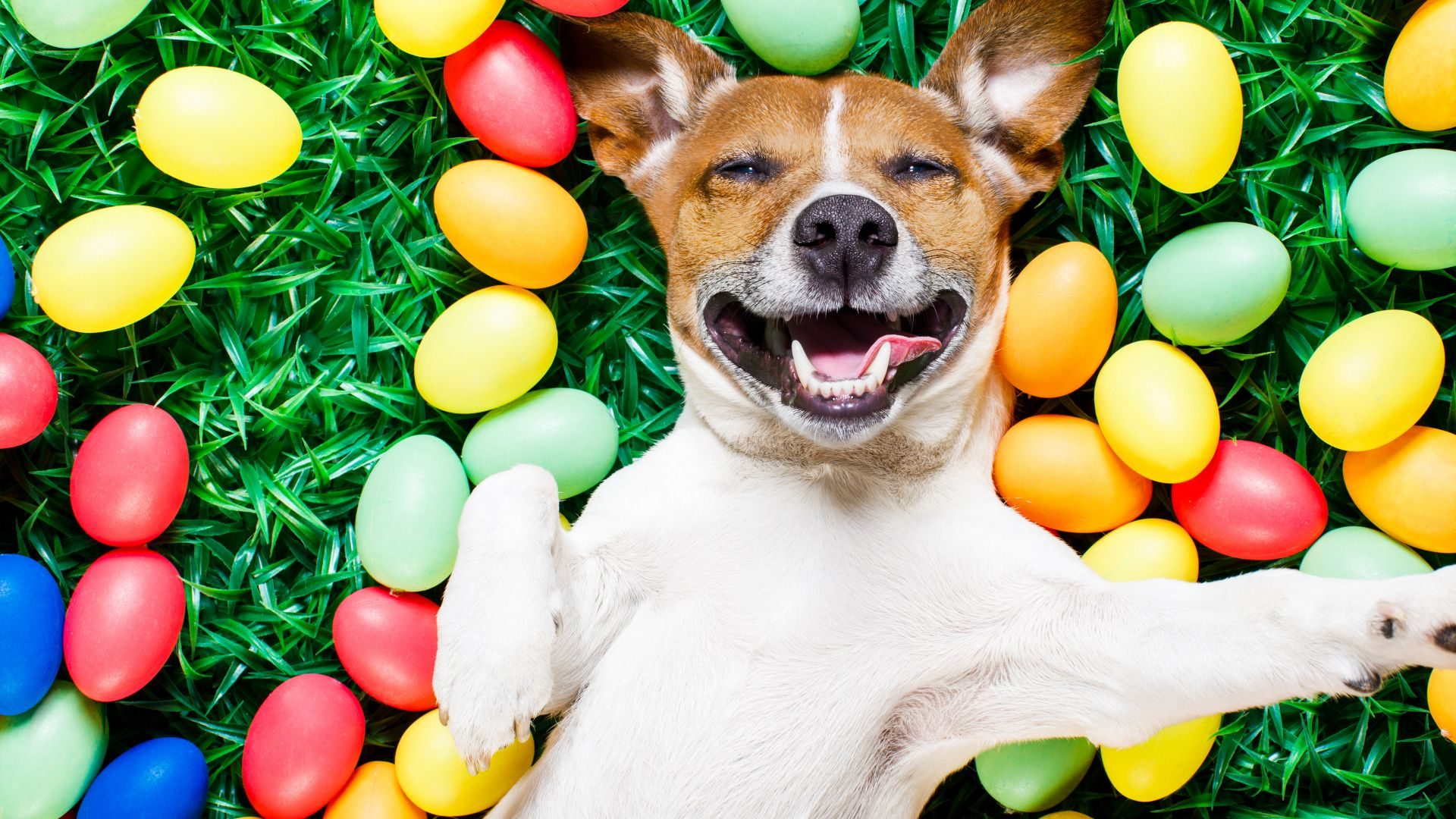 Easter, eggs, dog, 5k (horizontal)