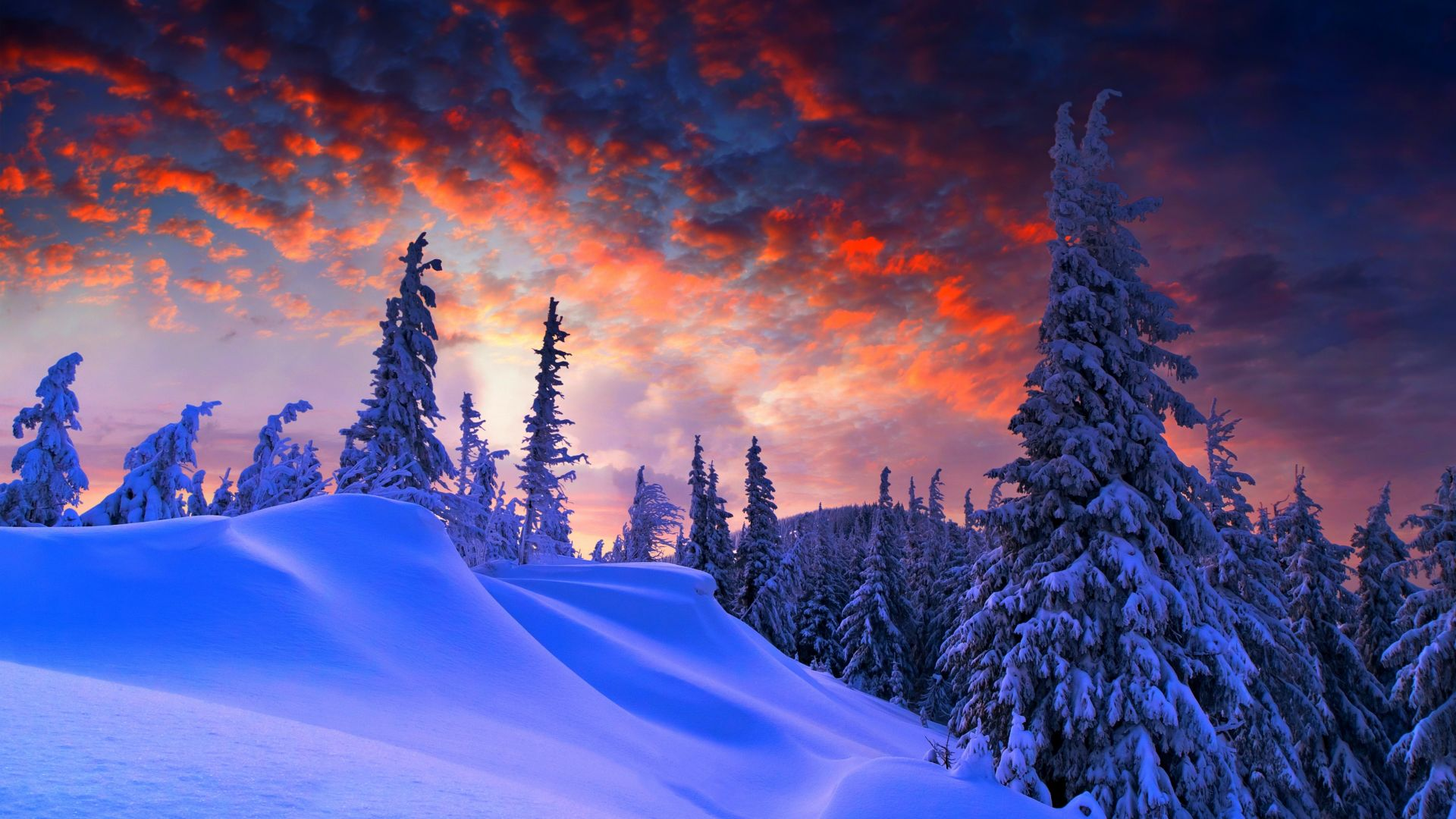 forest, snow, winter, sunrise, clouds, 8k (horizontal)