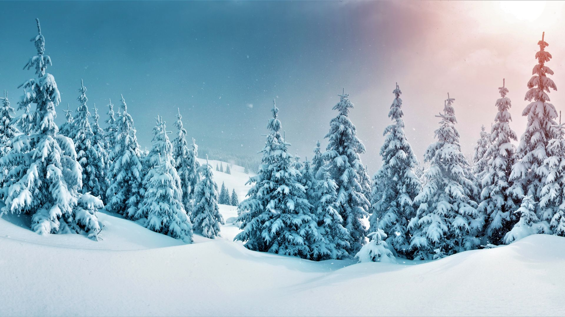 forest, trees, snow, winter, 5k (horizontal)