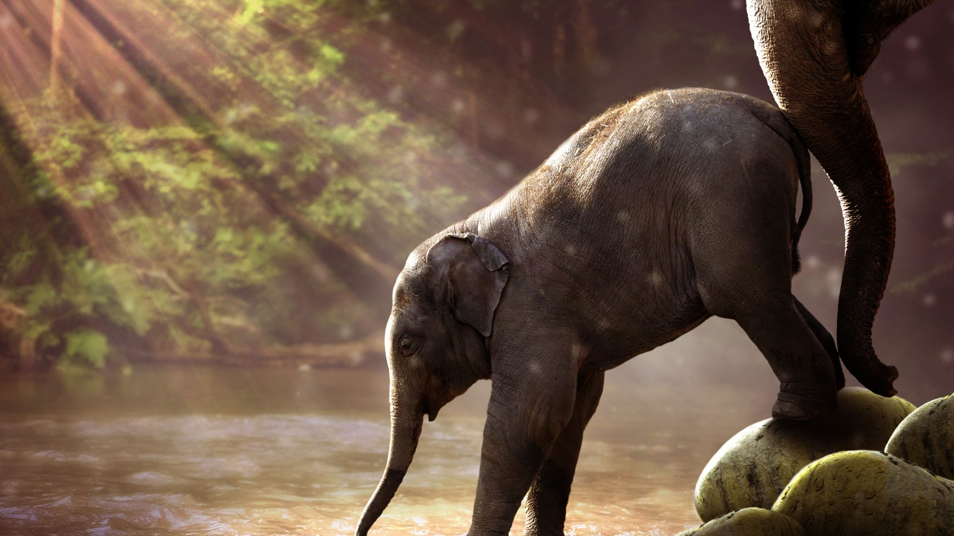 Elephant, funny animals, 7K (horizontal)