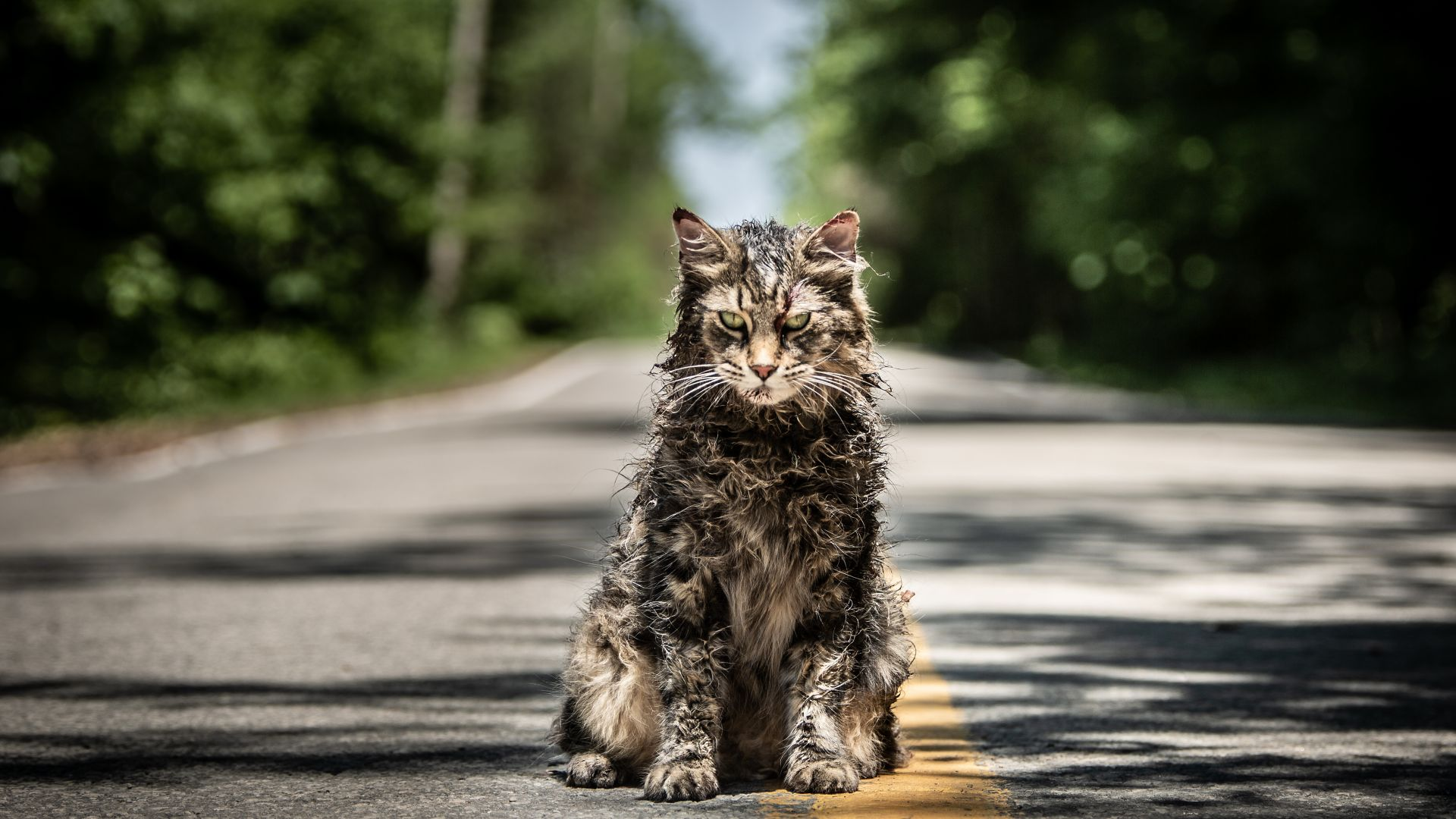 Pet Sematary, 4K (horizontal)