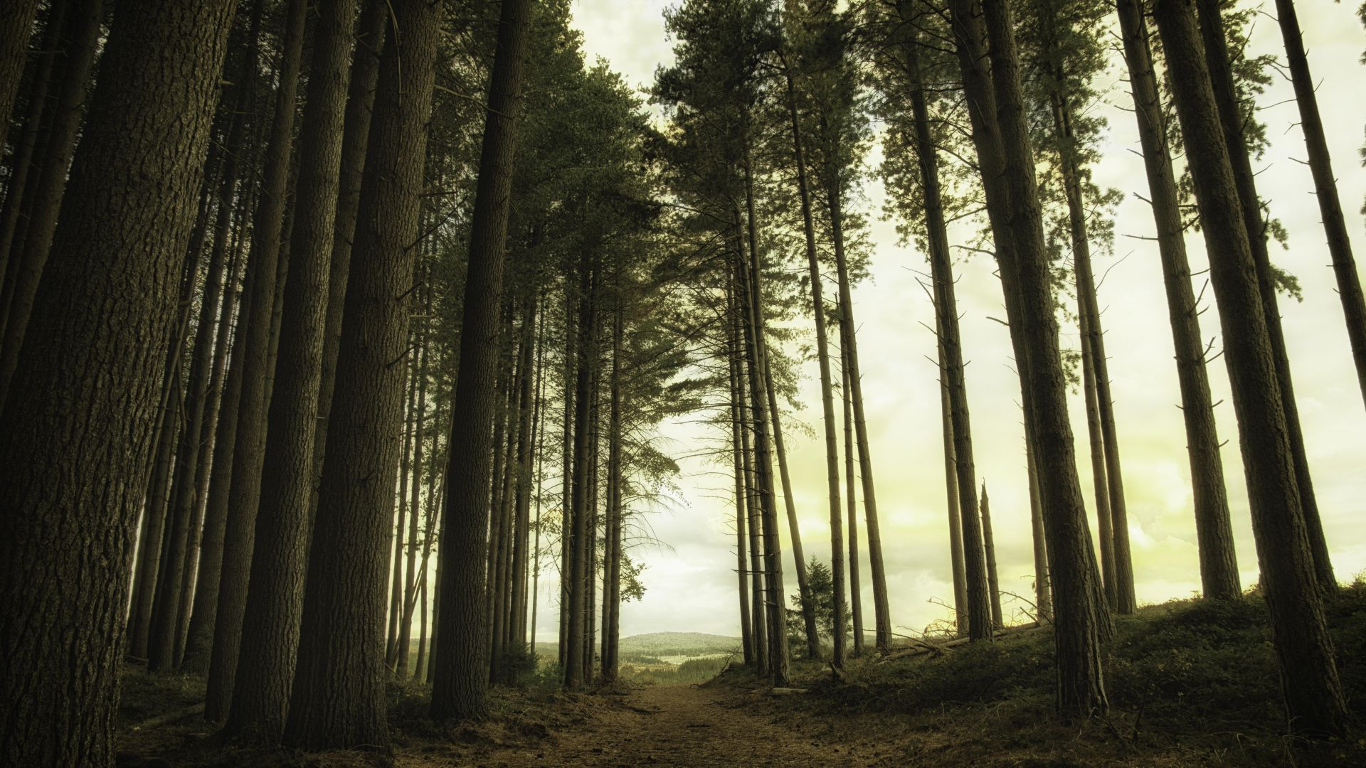 forest, green, light, 5K (horizontal)