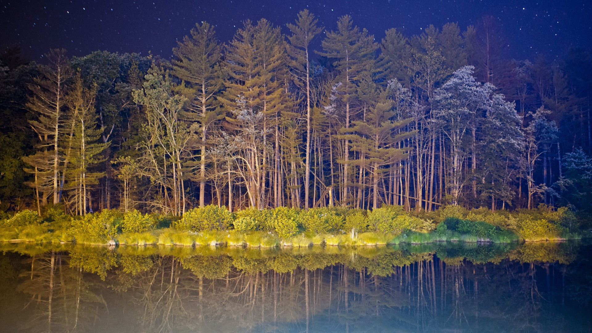 android, 5k, 4k wallpaper, forest, landscape, night, pond (horizontal)