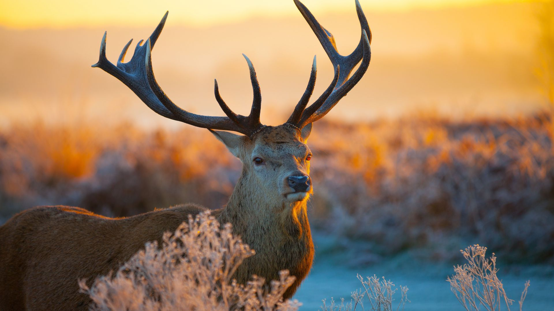 Deer, savanna, sunset, cute animals (horizontal)