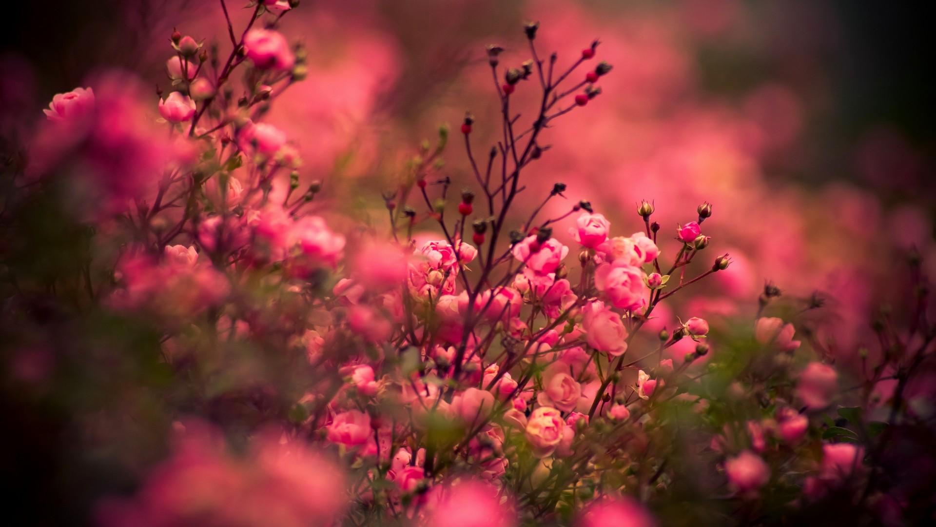 Фото цветов высокого качества на рабочий стол