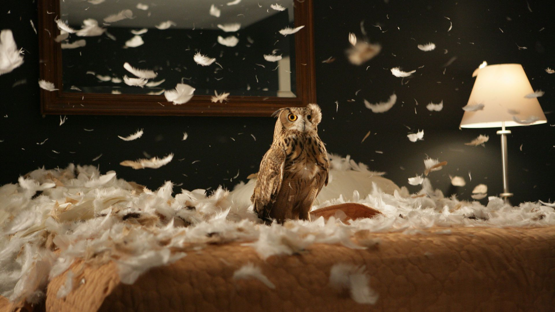 Owl, feathers, cute animals, funny (horizontal)
