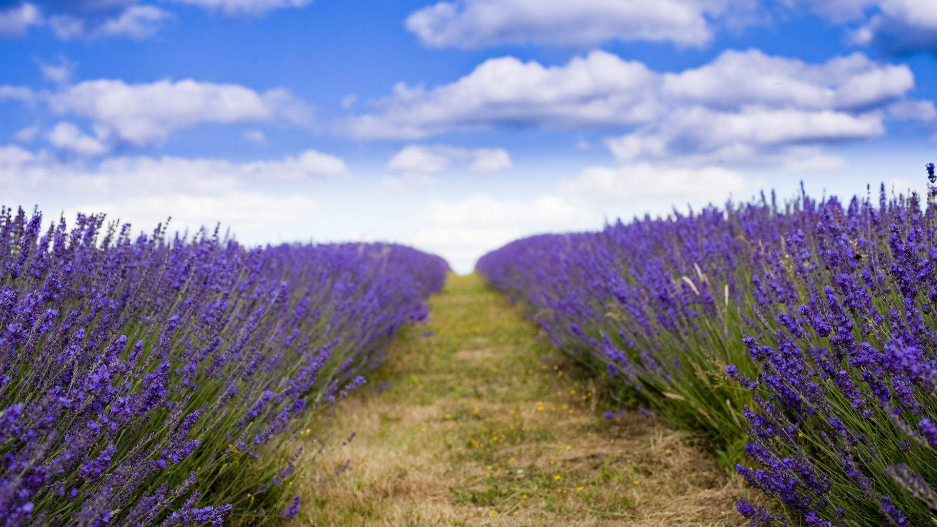 lavender, 5k, 4k wallpaper, 8k, field, flowers, sky, clouds (horizontal)