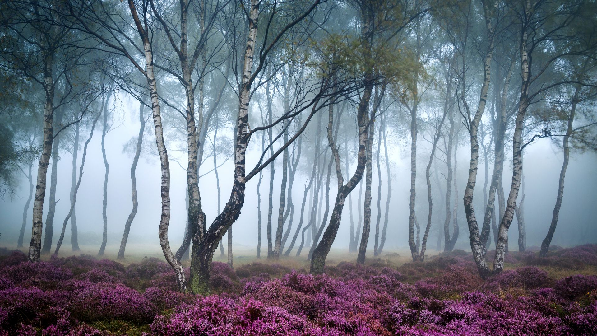 Stanton Moor, 5k, 4k wallpaper, 8k, Peak District, UK, Forest, wildflowers, fog (horizontal)
