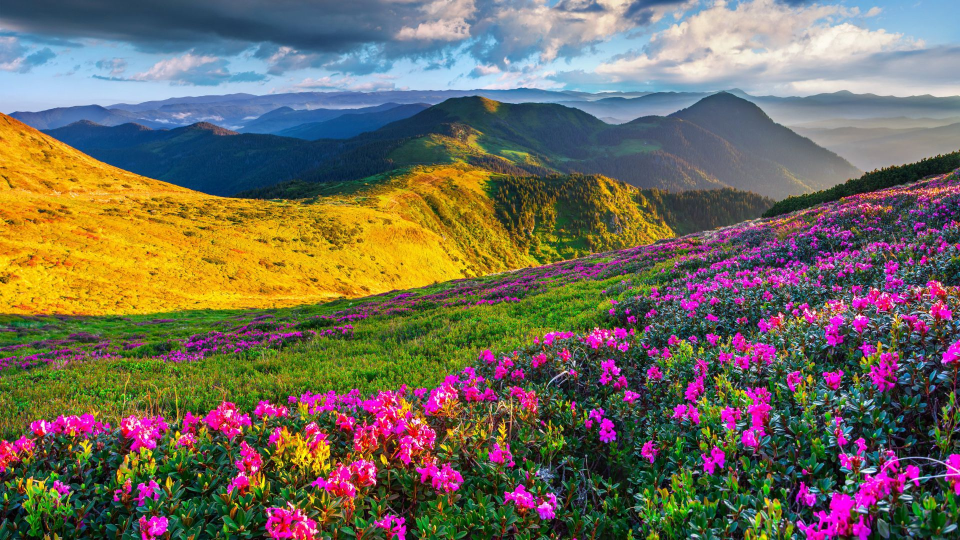 Slovenia, 4k, 5k wallpaper, Alps, meadows, azalea, mountains (horizontal)