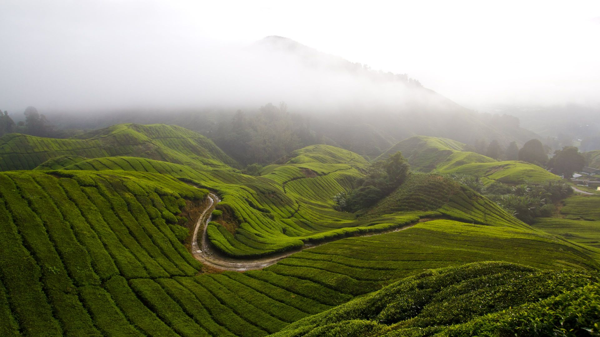 Cameron Highlands, 5k, 4k wallpaper, Malaysia, meadows, fog, sky (horizontal)