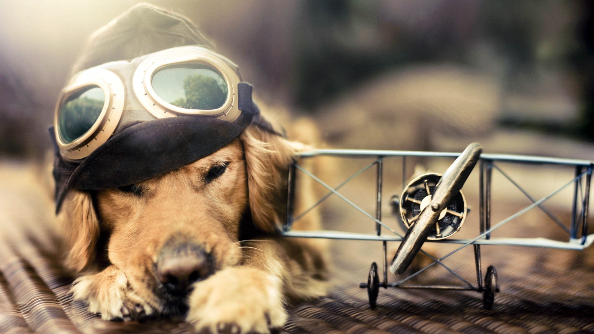 Puppy, Dog, plane, glasses, pet (horizontal)