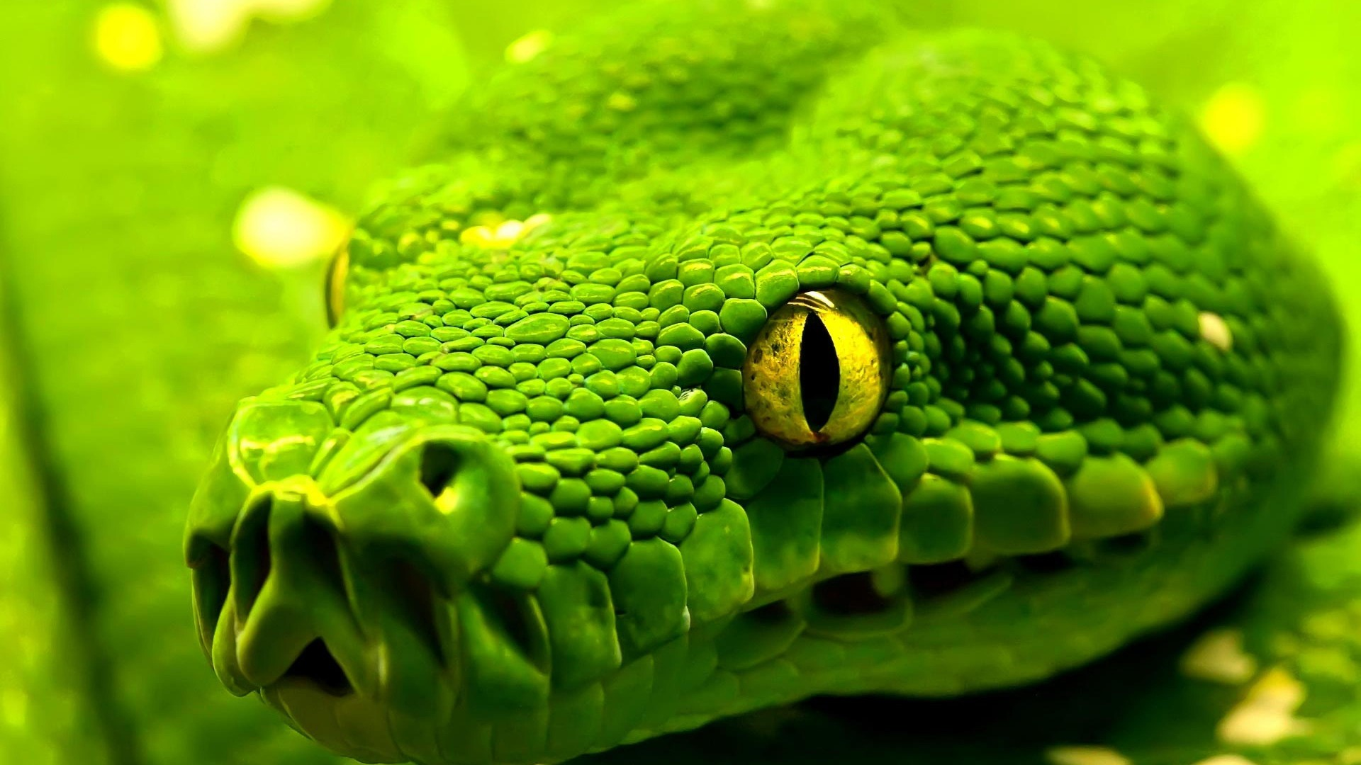Snake, green, reptile, eyes (horizontal)