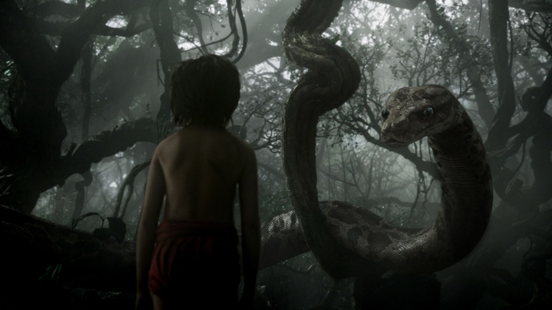 wallpaper the jungle book, mowgli, kaa, adventure, fantasy, best