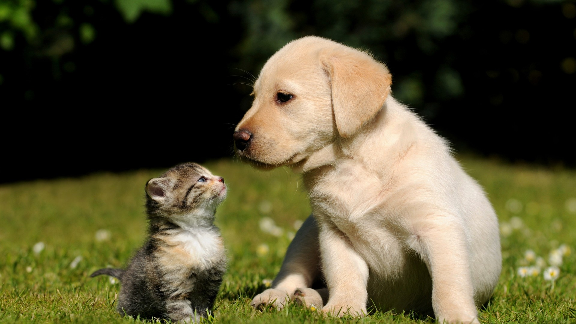 Friends, cat, dog, puppy, kitty, green, grass, sunny day, cute, pet (horizontal)