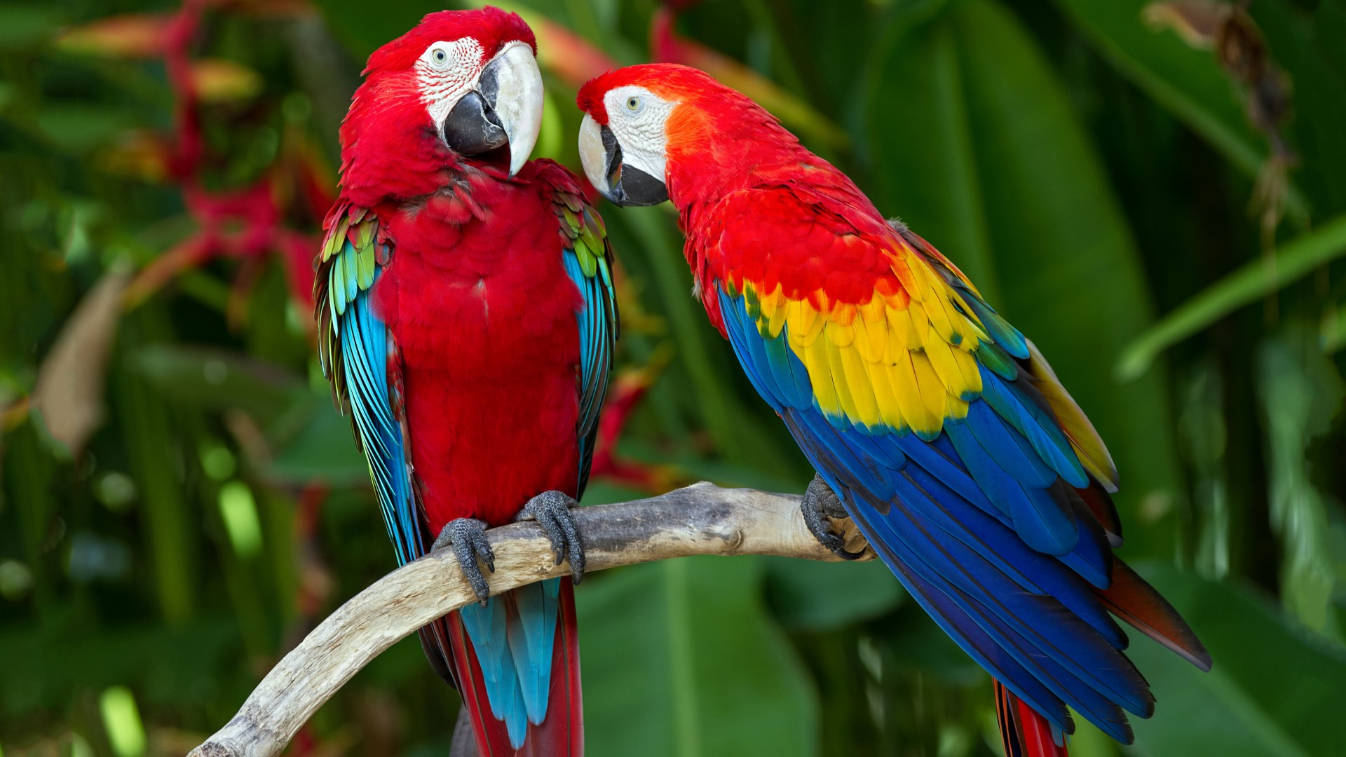 parrot, plumage, branch, exotic, red, blue (horizontal)