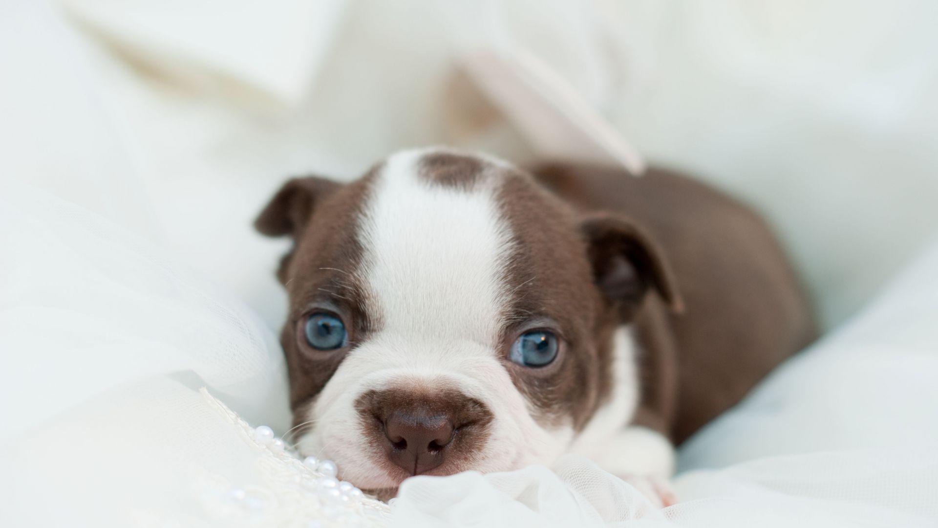 Hi Life Dog Food Pets At Home