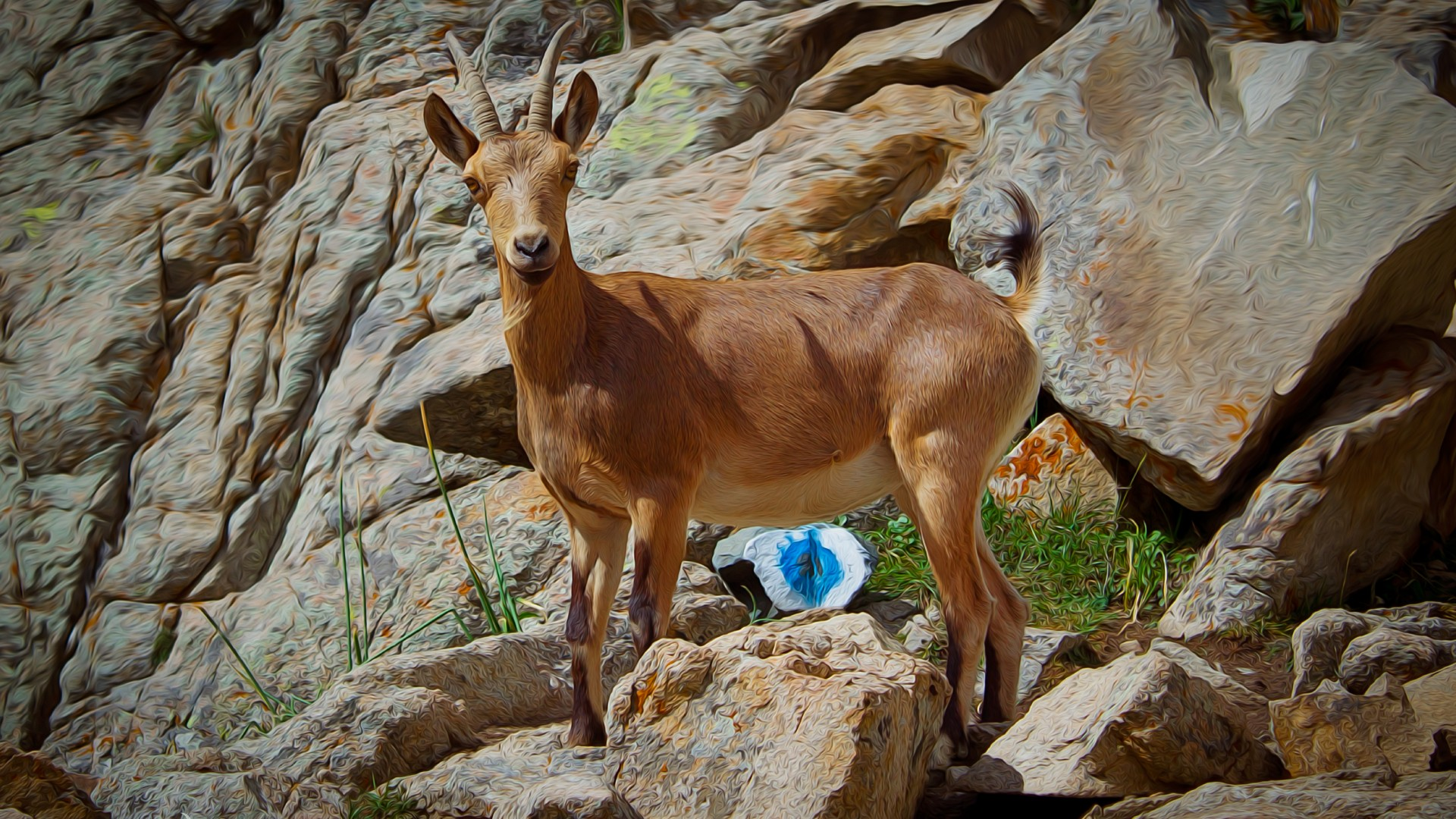 Wallpaper Goat Mountain Goat Nature Mountain Cliffs