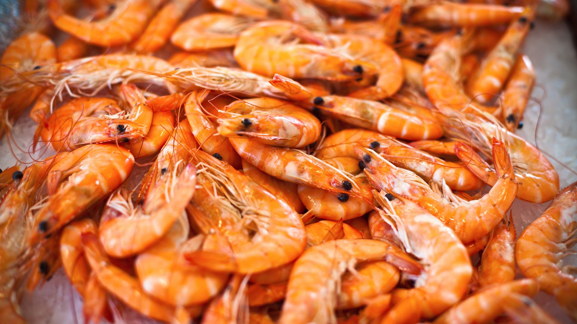 shrimp (horizontal)