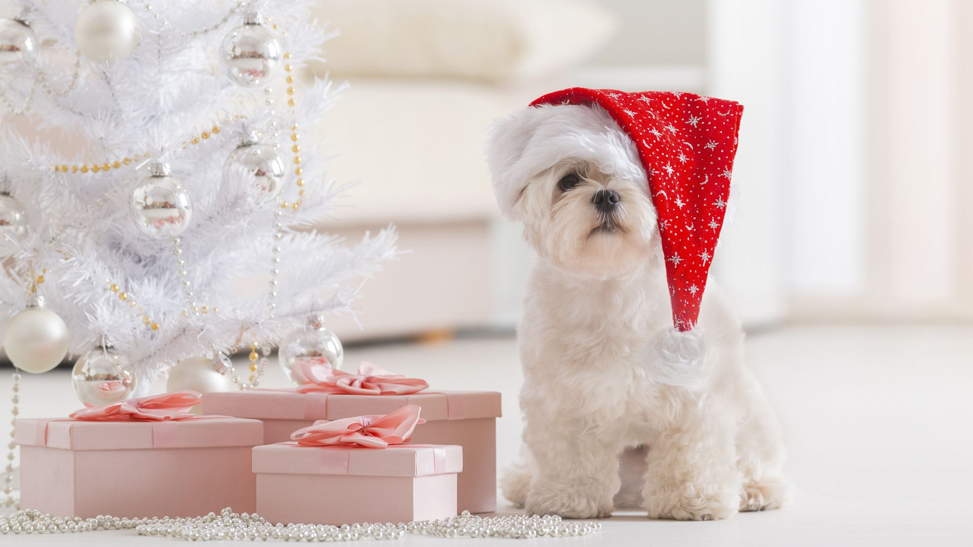 Puppy, Christmas, New Year, fir-tree