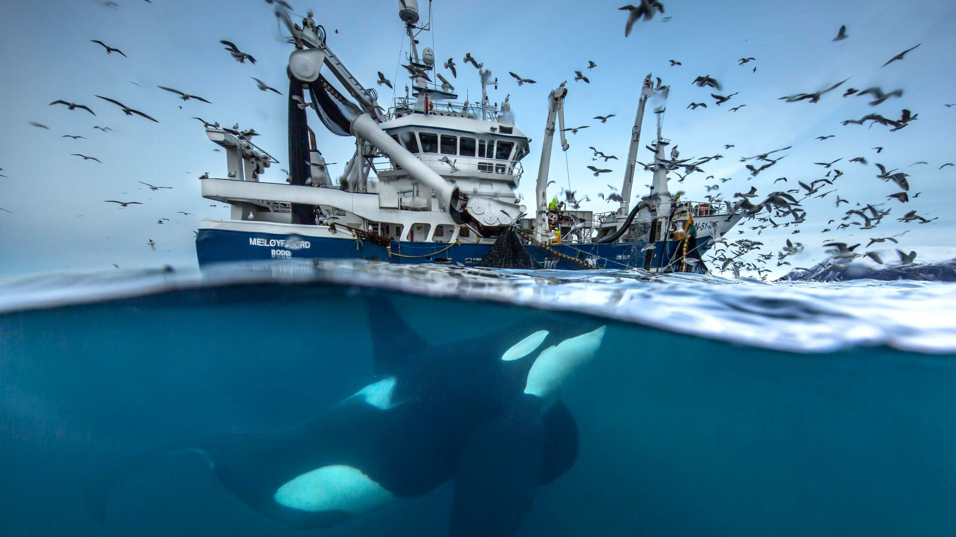 2016 Wildlife Photography finalist, whale, boat, birds, Norway, Ocean, underwater