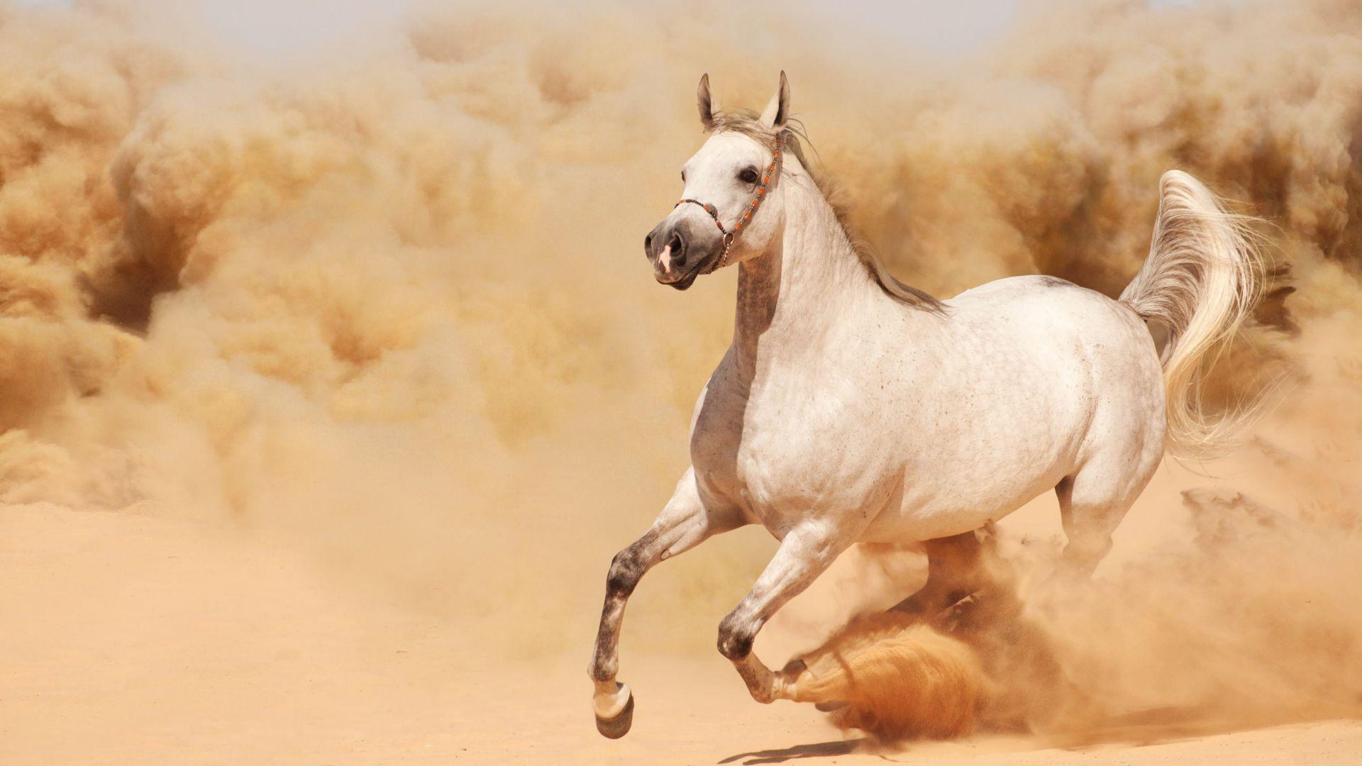 8k Animal Wallpaper Download: Wallpaper Horse, 8k, Animals #14946