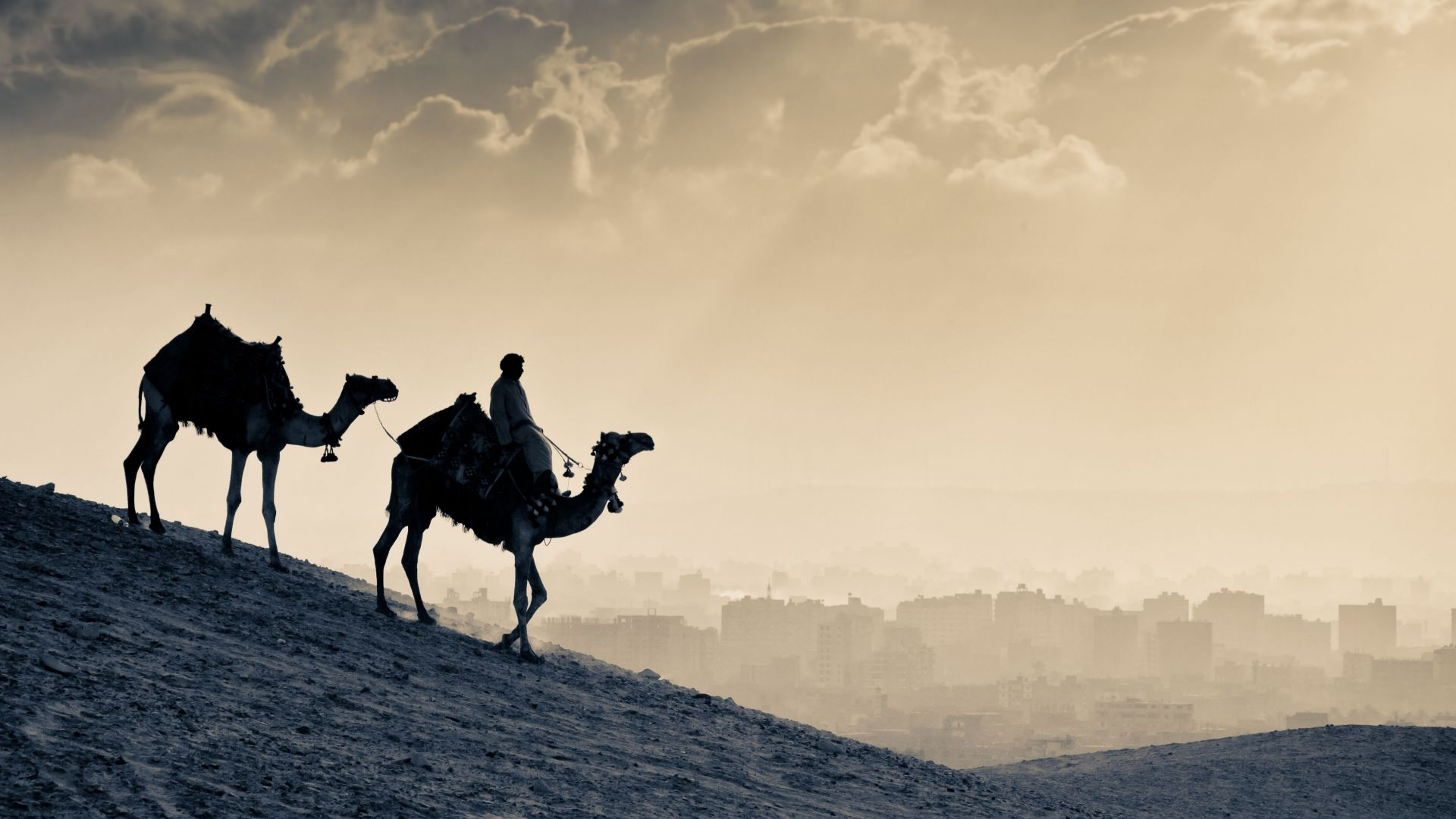 Camel, desert, sunset (horizontal)