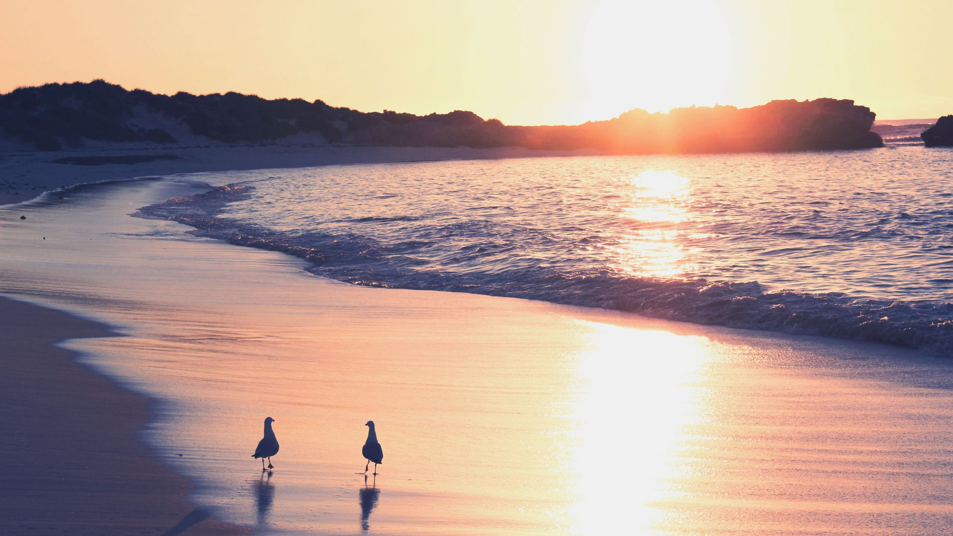 Ocean, 5k, 4k wallpaper, sea, sunrise, shore, seagull, beach (horizontal)