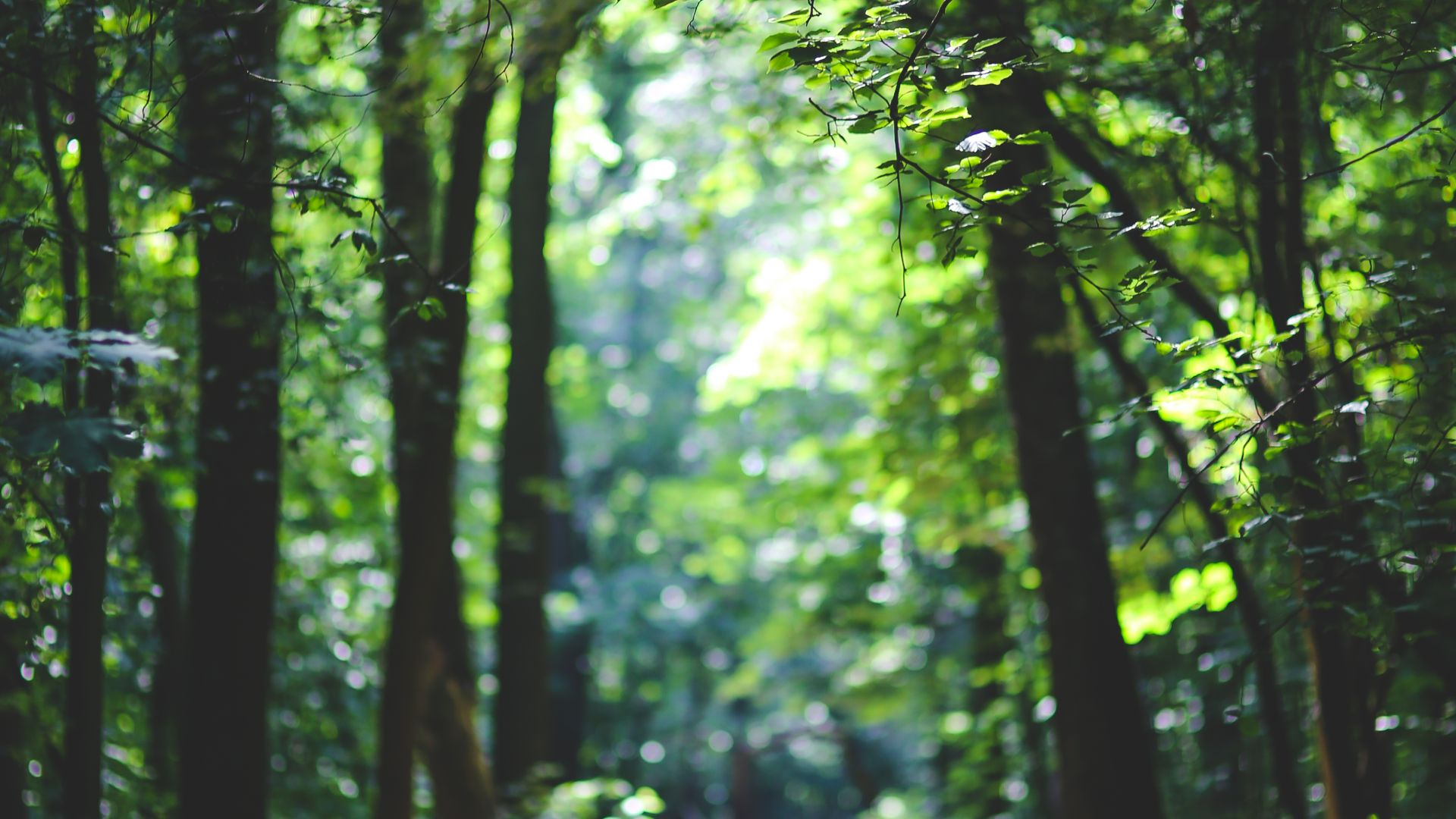 Wallpaper forest 5k 4k wallpaper 8k trees sunlight for Wallpaper home 4k