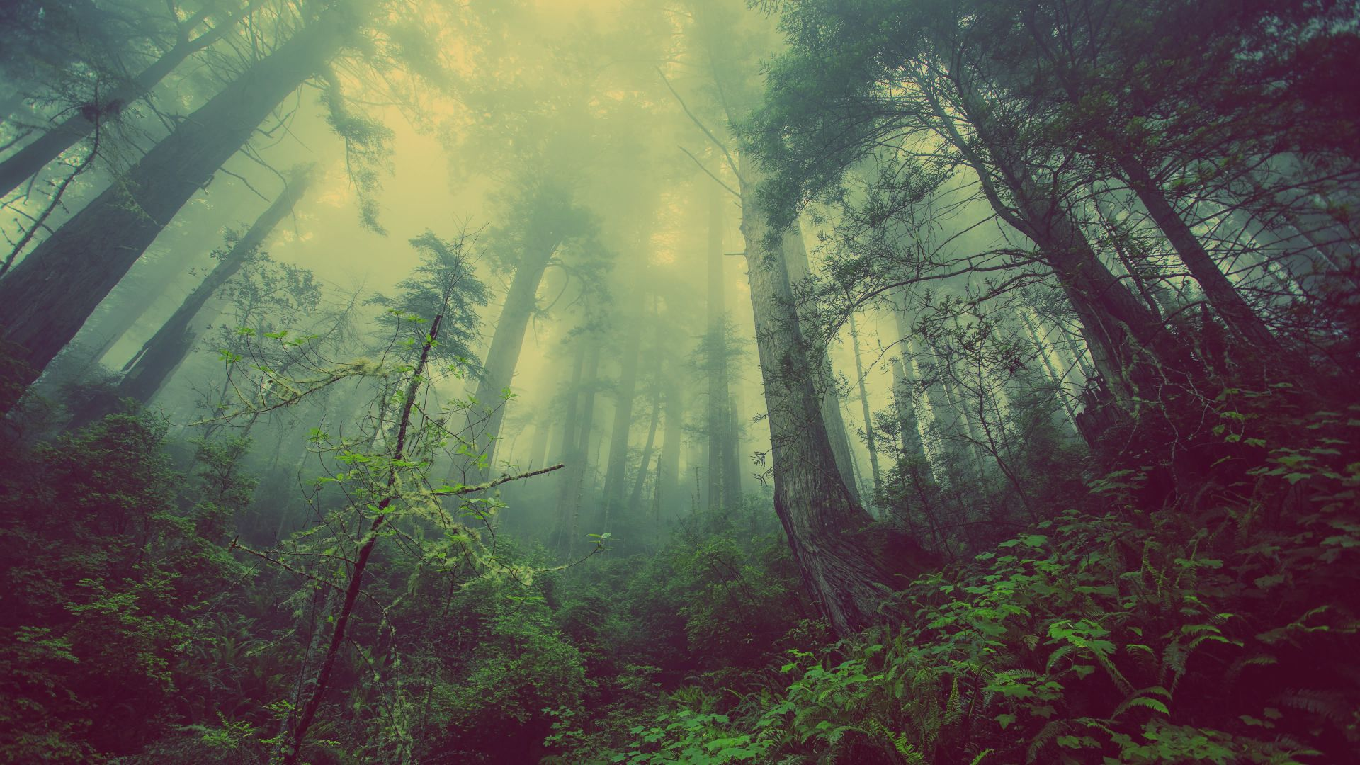 forest, green, fog, threes