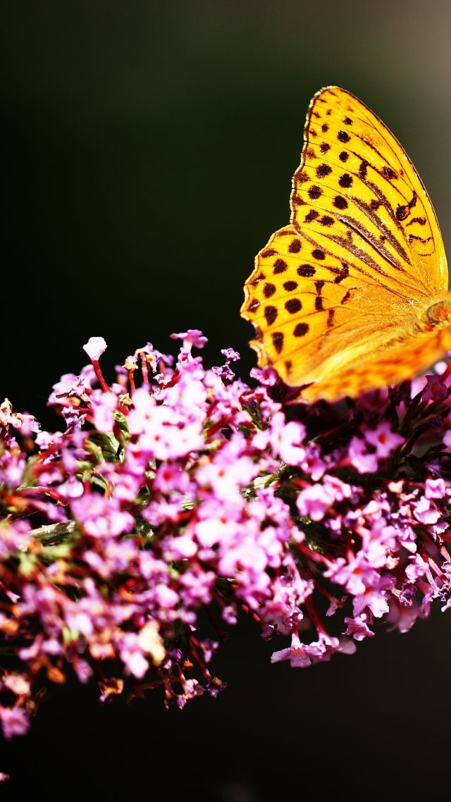 Butterfly, insects, flowers, Glass, nature, garden (vertical)