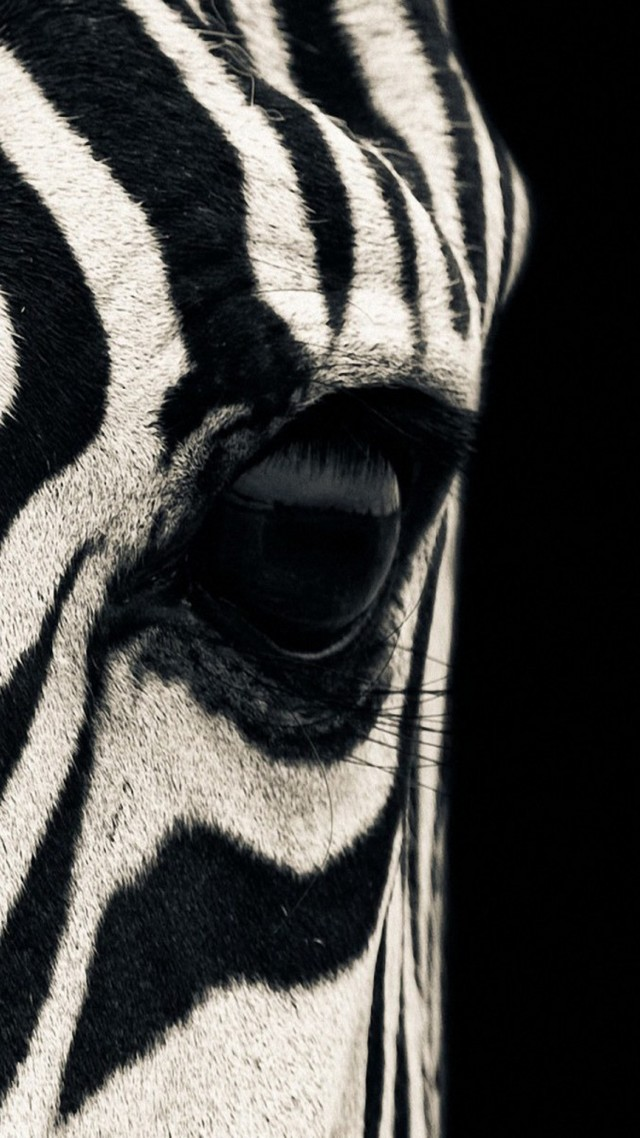 Zebra, eye, Black & White, couple, cute animals (vertical)