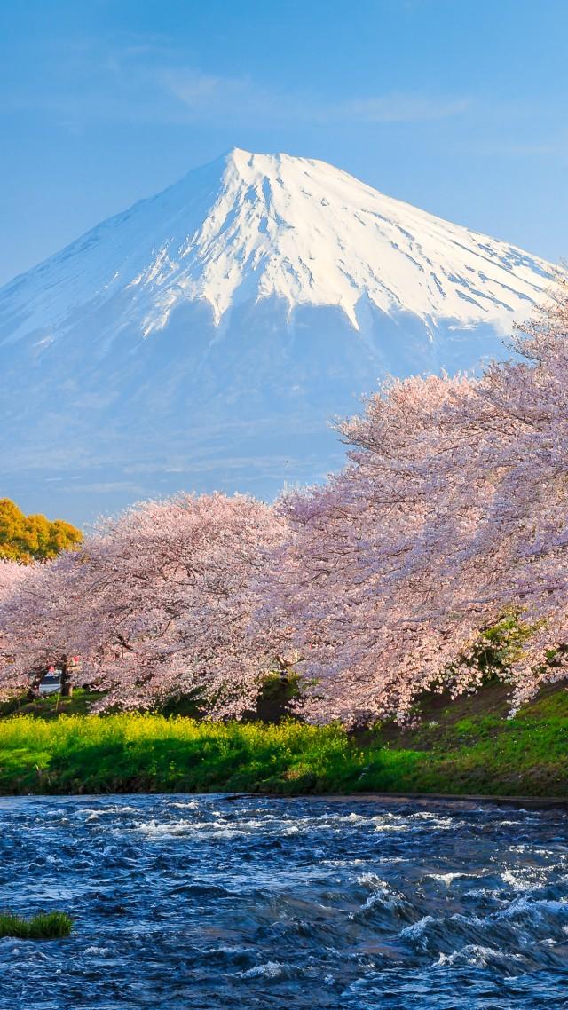 Wallpaper fuji, 4k, HD wallpaper, sakura, river, japan ...
