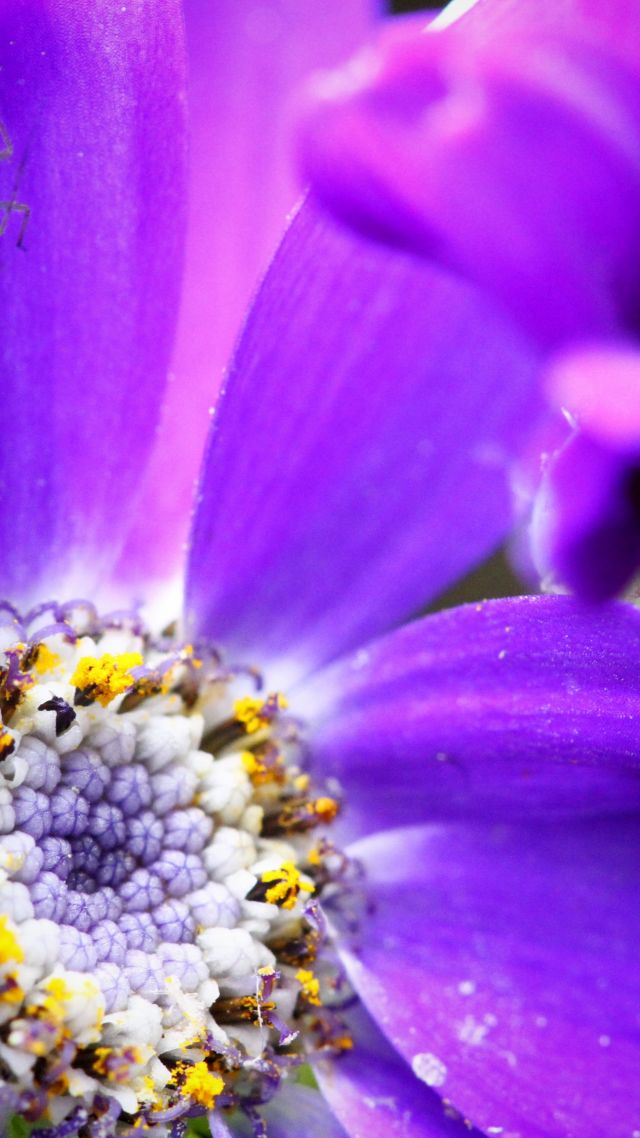 bee, 4k, HD wallpaper, purple, flower, yellow, insects (vertical)