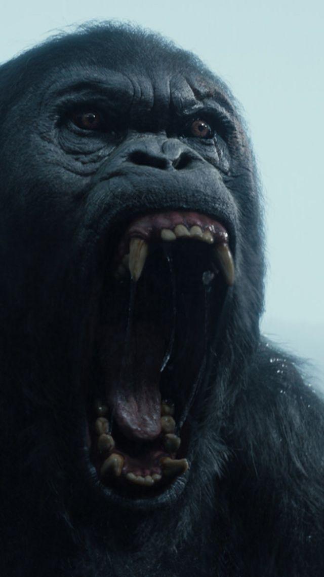 Wallpaper the legend of tarzan gorilla best movies 2016 movies 10933 - Tarzan gorille ...