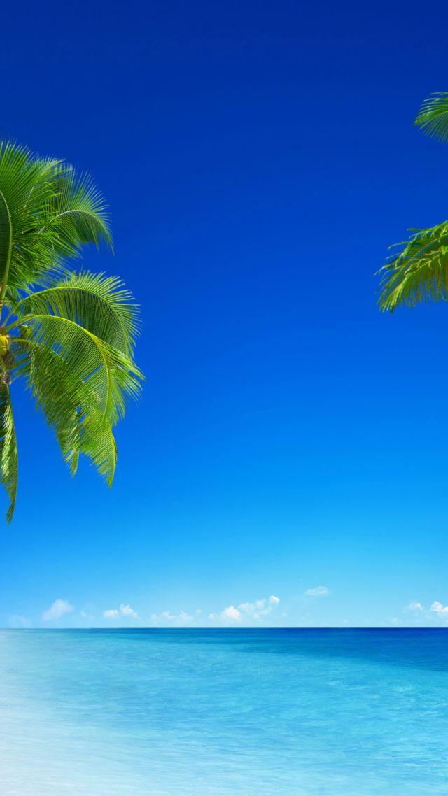 wallpaper tropical beach 5k 4k wallpaper 8k paradise palms sea