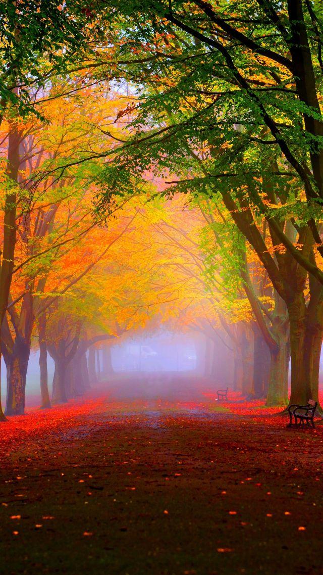 Wallpaper Park 5k 4k Wallpaper 8k Autumn Beautiful Leaves Trees Nature 12400