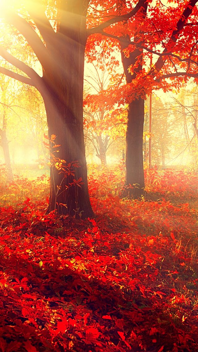 ... 5k, 4k wallpaper, autumn, beautiful, leaves, trees (vertical